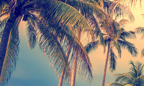 drug and alcohol rehab in florida